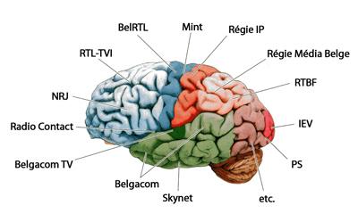 cerveauweb